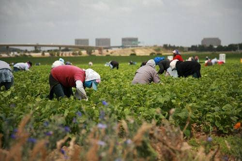 How U Visas Can Protect Immigrant Workers